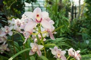Spinnmilben an Orchideen bekämpfen